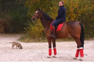 Tacante Tapis de selle EXCEL-ANSE dressage rouge cheval baie
