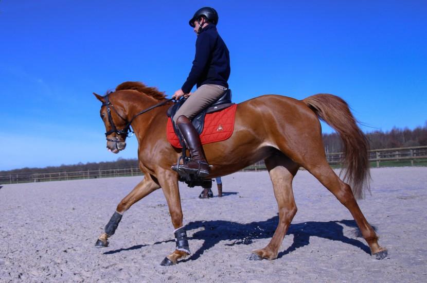 Tacante Tapis de selle EXCEL-ANSE dressage cheval alezan