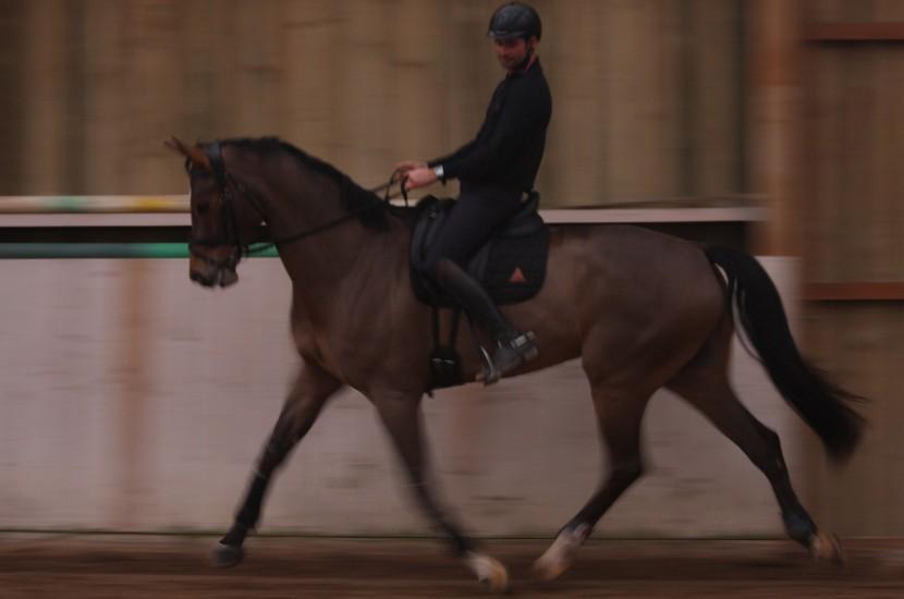 Tacante Tapis de selle EXCEL-ANSE dressage noir cheval baie