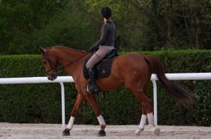 Tacante Tapis de selle EXCEL-ANSE dressage noir cheval alezan