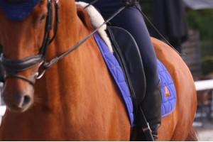 Tacante Tapis de selle EXCEL-ANSE dressage bleu roi cheval alezan