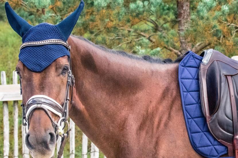 Tacante Bonnet cheval bleu marine face