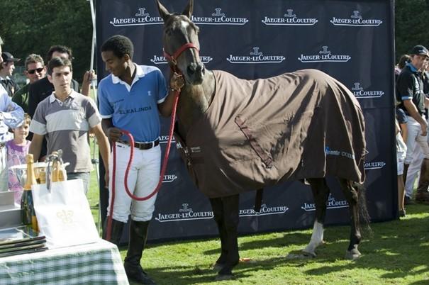 Rencontre avec un cheval de polo, Cachito