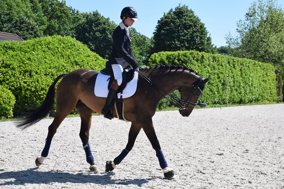 Confidences de Wimke, jument de para-dressage
