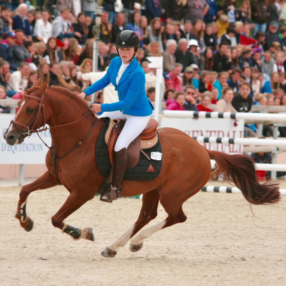 Rencontre équine du poney d'obstacles Royal Aronn du Vassal