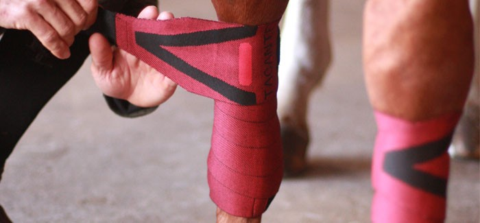 TACANTE environmentally friendly made in France exercise and stable bandages