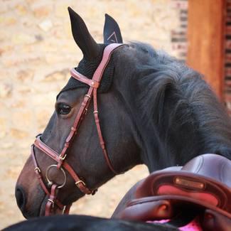 [Tacante Product]  👀 Focus sur notre bonnet INFI-KNIT : sa maille technique et sa coupe unique garantissent une bonne fixité sur la tête de votre cheval 😉  📲 Tous nos bonnets sont à retrouver sur tacante.com  #tacante #tacantefamily #bonnetcheval #flyveil #infiknit #3dknitting #horseriding #equitation #equestrian #equestrianlife #equestrianworld #equestrianoutfit #equestrianstyle #ecoresponsable #sustainable #rse #csr #madeinfrance