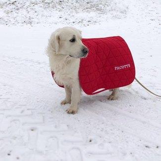 Vie de chien...  Avouez...à qui avez-vous essayé votre tapis de selle avant de le mettre sur votre cheval?  Tous notre gamme d'équipement Equestre est personnalisable. Pour obtenir un devis envoyez nous un mail à contact@tacante.Com