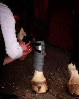 [Tacante outfit] Les bandes de travail INFI-KNIT nous sont devenues indispensables ! Saurez-vous nous dire quelle est leur particularité ?  Indices : ♻️💧  #tacante #tacantefamily #bandesdetravail #bandages #infiknit #knitting #horseriding #equitation #equestrian #equestrianlife #equestrianworld #equestrianoutfit #equestrianstyle #ecoresponsable #sustainable #rse #csr #madeinfrance